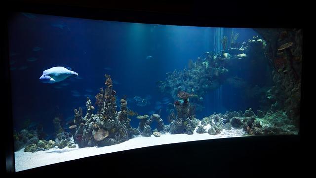 Conseils pour les bonnes affaires lors de l'achat d'un aquarium d'eau salée